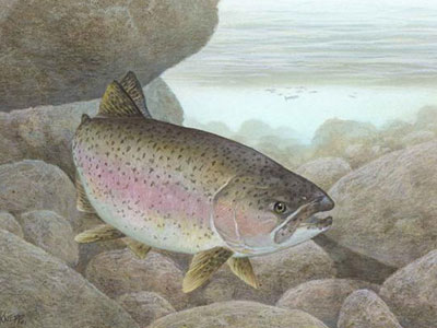 Rainbow Trout: $100